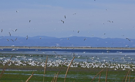 Birds, Birds and more Birds, entrance to Dungeness Bay