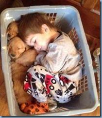 menino dormindo cesto roupas cachorros filhotes domingo sabado