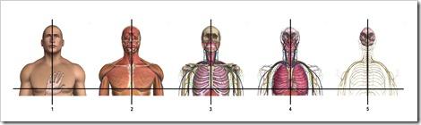 Body Composite 3
