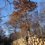 Roue forestière de Fontaine Couverte