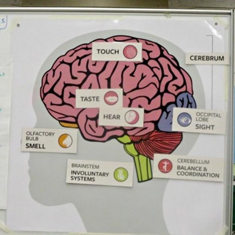Hands On Neuroscience for Kids