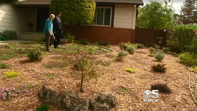 Drought-tolerant yard: Homeowners in drought-stricken California are coming up against neighborhood rules requiring green grass. Photo: CBS SF