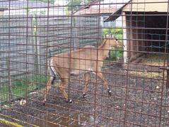 2006.08.28-014 nilgaut