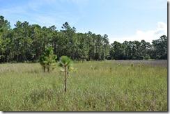 Grassy field by pond