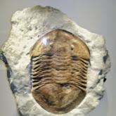 Houston Museum of Natural Science - 116_2687.JPG
