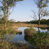 Hamberger Moor