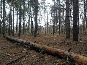 лес23.jpg