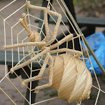 En halmedderkop