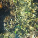 Snorkel - Rabida - Galápagos