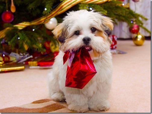 perro navidad (9)