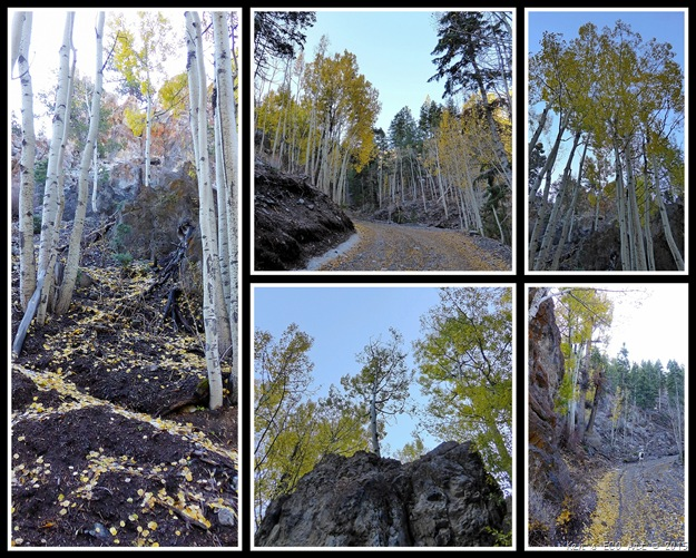 2015 Deer Creek Aspens
