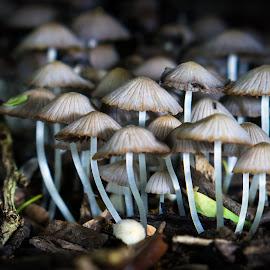 Say Cheese, or is that Mushroom? by Matt Pranger - Nature Up Close Mushrooms & Fungi ( up close, fungi, nature, spring, rain, portrait, mushrooms )