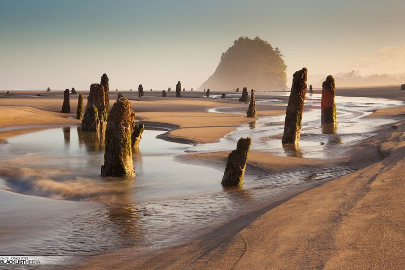 neskowin-ghost-forest-6