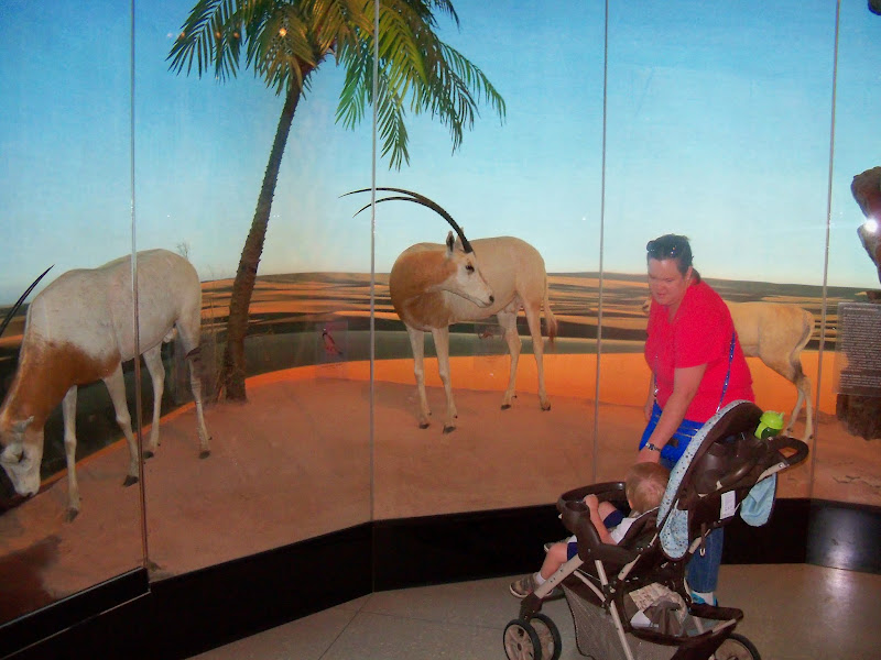 Houston Museum of Natural Science - 116_2819.JPG