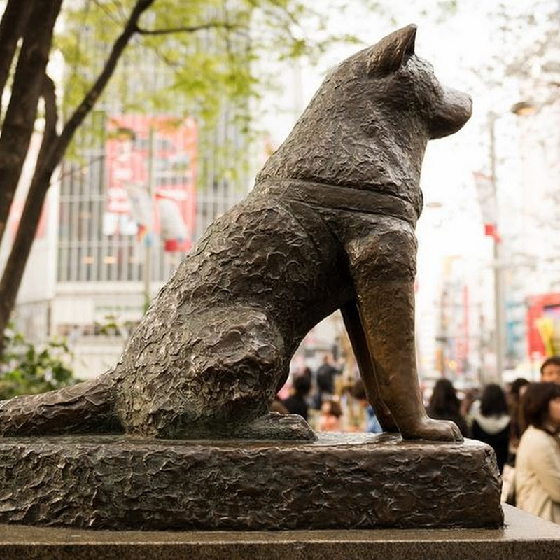 Hachiko: The Most Loyal Dog in History