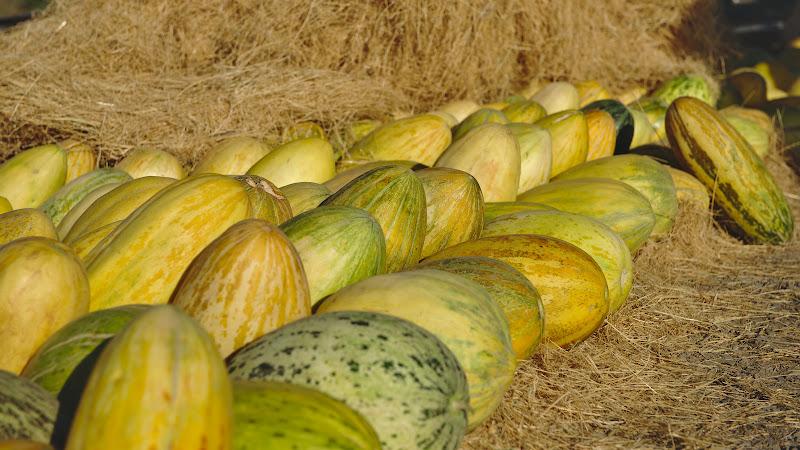 Pepeni galbeni din besug, ideali pentru hidratare in timpul zilei.