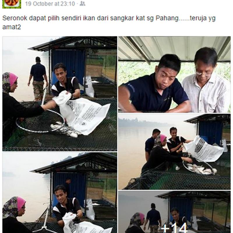 Terbaik dari sungai Pahang !