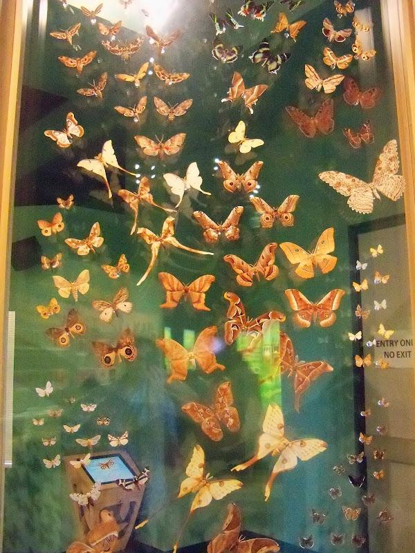 Houston Museum of Natural Science - 116_2858.JPG