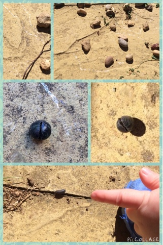 Snail trails and woodlice http://laura-honeybee.blogspot.co.uk/2015/06/30-days-wild-4-secrets-and-lice.html