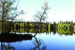 U Lokte řeka Ohře vtéká do Chráněné krajinné oblasti Slavkovský les, která se rozkládá na 640 km2 mezi městy Kynšperk nad Ohří, Mariánské Lázně a Karlovy Vary. Nejvyšším vrcholem je Lesný (983 m n. m).
