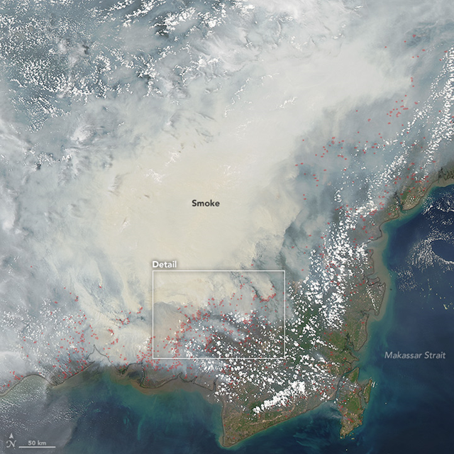 Heavy smoke pours from peat fires in Borneo, Indonesia. The Moderate Resolution Imaging Spectroradiometer (MODIS) on NASA's Aqua satellite captured this image on 19 October 2015. Red outlines indicate hot spots where the sensor detected unusually warm surface temperatures associated with fires. Gray smoke hovers over the island and has triggered air quality alerts and health warnings in Indonesia and neighboring countries. Photo: Jeff Schmaltz / Adam Voiland / NASA Earth Observatory