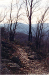 Trail on the ridge, Massanutten Mountain, George Washington National Forest, Virginia.