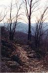 Trail on the ridge, Massanutten Mountain, George Washington National Forest, Virginia.