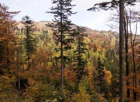 Lesy južných svahov Kojšovskej hole.