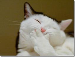 gatos divertidos buscoimagenes (1)