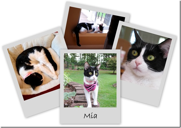 mia collage