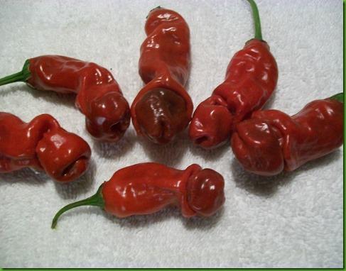 Pimenta Penis de Aldrey1