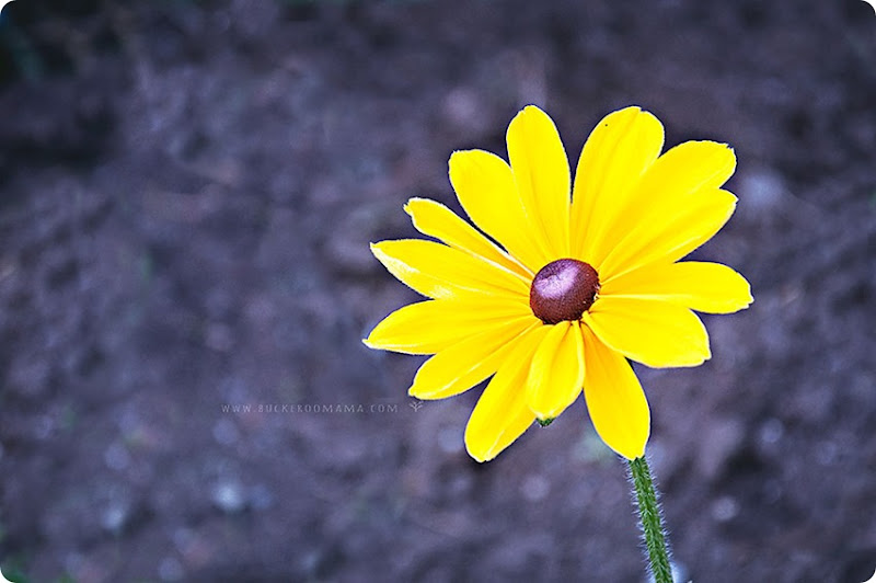 Yellow-flower-(1)