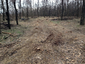 лес31.jpg