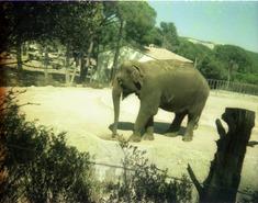 1982.06.28-028.10 éléphant