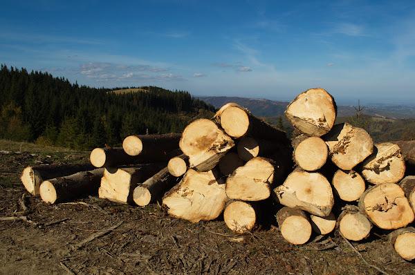 карпаты вырубка леса