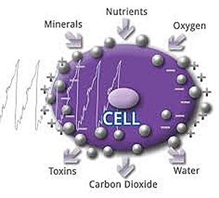 PEMF CELL PULSE
