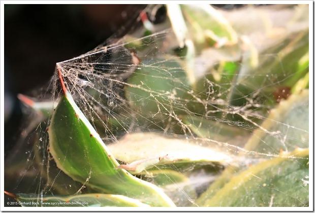 150611_spiderwebs_002