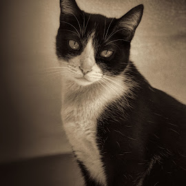by Jim Knoch - Animals - Cats Portraits