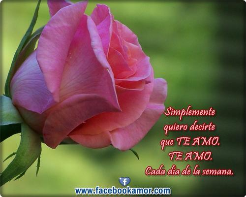 rosas rojas el amor Descargar Fotos gratis Freepik - Rosas De Amor Imagenes