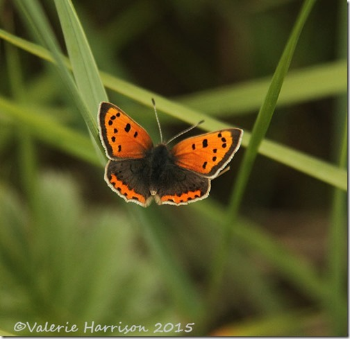 9-Small-Copper