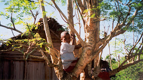 A boy climbing the tree to cut down some leaves that will be cooked and served to us.