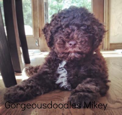 gorgeousdoodles