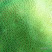 Buck Island Reef - IMGP2356.jpg
