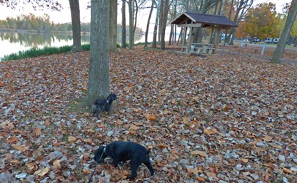 Maumelle Park Campground, Bubba and Skruffy