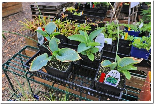 150911_AlaskaBG_plantsale2