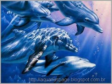 golfinhos-humanos