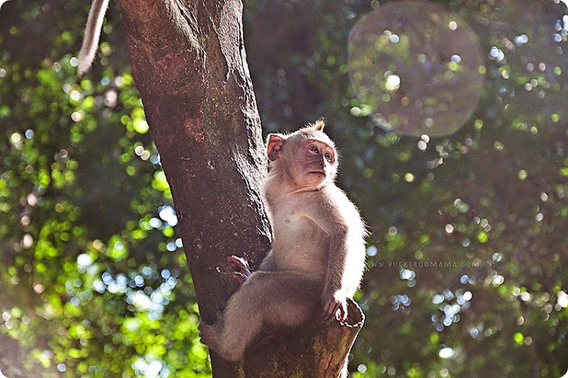 Monkey-(1)