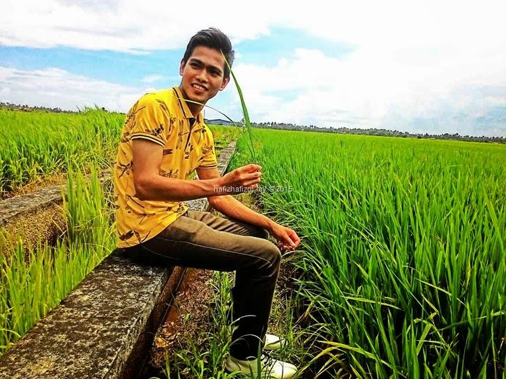 gambar sawah padi sekinchan