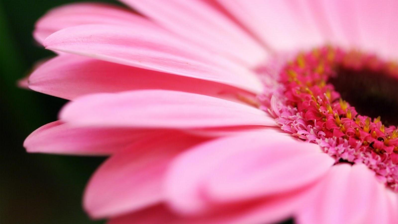 pink oriental lily wedding
