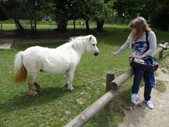 201506.21-047 Stéphanie et un poney
